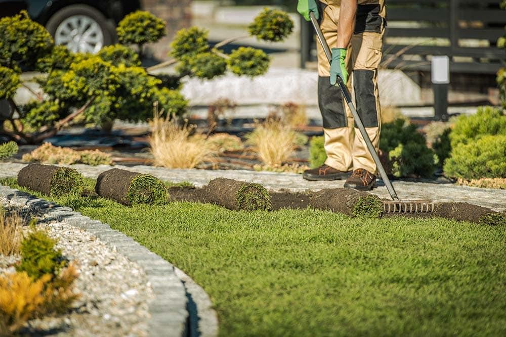 new lawn fertilizer