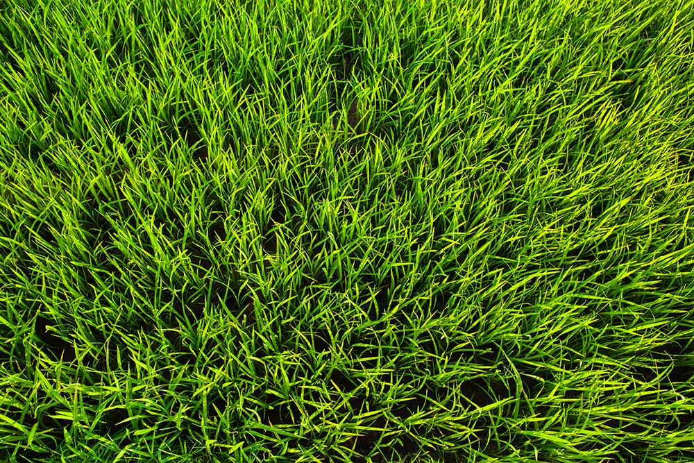 warm vs cool grass